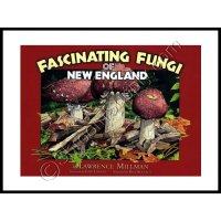 Fascinating Fungi of New England