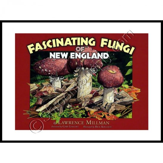 Fascinating Fungi of New England - Click Image to Close