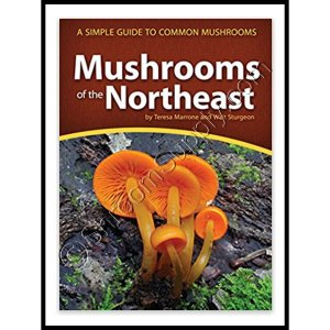 Mushrooms of the Northeast